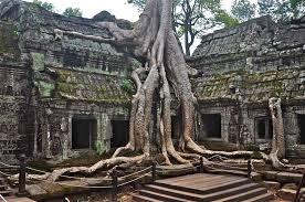 angkor wat cambodia ta prohm trees surfas ing