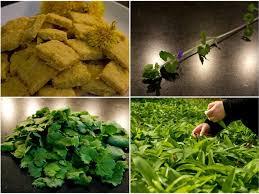 cuisiner les herbes sauvages cuisiner avec les plantes sauvages atelier cuisine saine par l