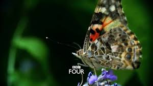 four the great butterfly adventure africa to britain with
