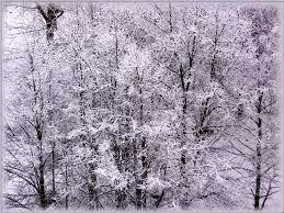 winter scenes wallpaper wallpapersafari