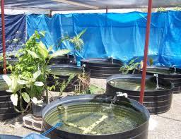 jamaican ornamental fish project building bridges compete