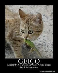 Pet Insurance Meme - 51 best insurance humor images on pinterest insurance humor funny