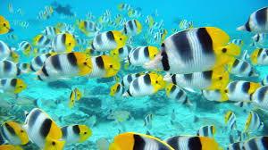 new pictures tropical fish desktop wallpaper amazing tropical