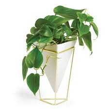 Small Desk Plants by Trigg Table Top Vessel