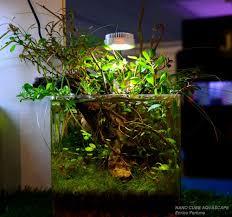 nano aquascape aquascape pools lovely nano cube aquascape aquascaping aquarium