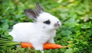 rabbit food rabbit foods rabbits