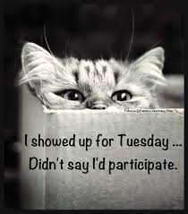 Tuesday Funny Memes - tuesday humor animal funny cat humor cute cats silly things