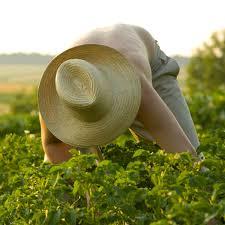 vegetable garden care u0026 maintenance planet natural