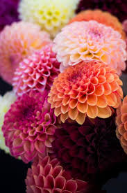 pinkyy world pinterest flowers