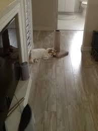 Laminate Flooring And Dogs Coastal Pine 10mm Pergo Xp Laminate Flooring Pergo Flooring