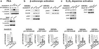 phosphorylation of ser1166 on glun2b by pka is critical to