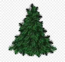 fraser fir tree fraser fir balsam fir clip fir tree pictures png