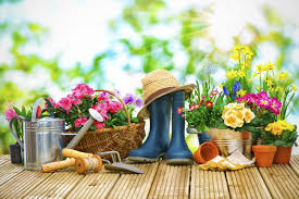 terrace gardening benefits of a terrace garden ijugaad blog