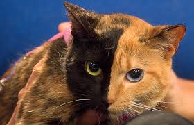 venus the two faced cat still a mystery