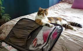 tips for traveling with a cat plus adorable kitty pics travel