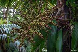 tropical homes eastern caribbean book goes print ozone