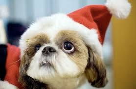 four reasons why puppies make bad presents earthbath