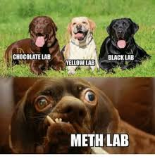 Chocolate Lab Meme - 25 best memes about black lab yellow lab meth lab black lab