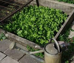comprehensive guide to growing a home vegetable garden
