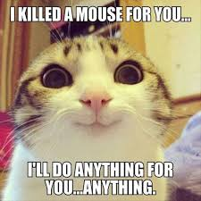 43 Best Funny Images On - 43 best funny stuff images on pinterest funny stuff funny kitties