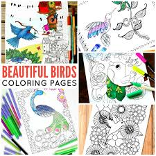 bird coloring grown ups trail colors