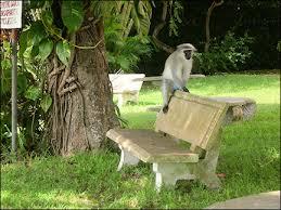 Monkey Bench Travelogue Vacation Kwazulu Natal South Africa Off The Beaten