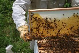 become a beekeeper backyard beekeeping for beginners hgtv