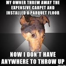 Tired Dog Meme - i got tired of my carpets smelling like dog vomit meme on imgur