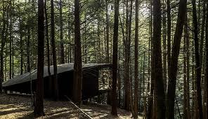 half tree house is a modern grid cabin built for 20 000