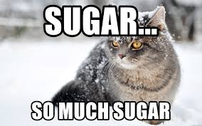 So Much Cocaine Meme - sugar so much sugar cat in snow cocaine meme generator