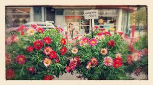 plante vivace soleil anthemis plante vivace pour climats doux lno