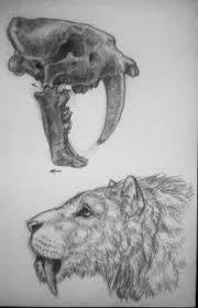 line art and sketches on smilodon lovers deviantart