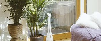 how to choose large u0026 small indoor plants at homebase co uk