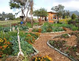 permaculture garden layout permaculture home design ready to get started permaculture home