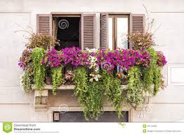 italian balcony windows full of plants and flowers stock photo