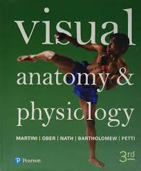visual anatomy u0026 physiology 3rd edition frederic h martini