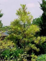 native trees for missouri landscapes