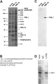 Flag Complex Physical And Functional Link Of The Leukemia Associated Factors