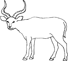 antelope coloring pages getcoloringpages com