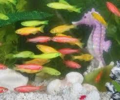 types of aquarium fish the underwater world of the sea