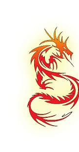 tribal dragon tattoos high quality photos and flash designs of