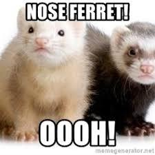 Ferret Meme - ferrets meme generator