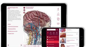 Anatomy And Physiology Human Body Anatomy U0026 Physiology Professor Portal