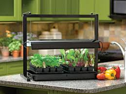 indoor garden offers winter option for flavor seekers growing
