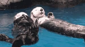 Sea Otter Meme - 22 reasons sea otters are your favorite sea creature