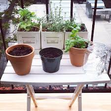 best 25 balcony herb gardens ideas on pinterest herb garden