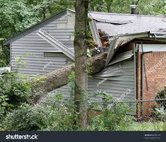 A Small House Large Oak Tree Falls On Destroys Stock Photo 88955176 Shutterstock