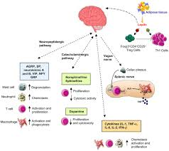frontiers neuro endocrine networks controlling immune system in