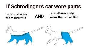 Meme Pants - schrödinger s cat if a dog wore pants know your meme