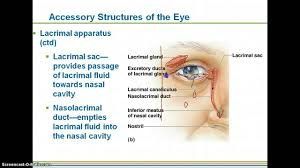 Eye Anatomy And Physiology Special Senses Notes Part 1 Intro To Eye Youtube